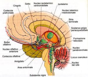 Gli Psicofarmaci danneggiano il cervello