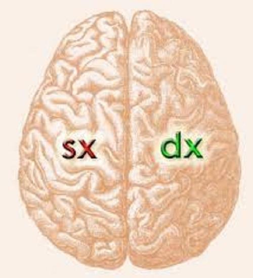detailed look ae6ad 086fc Proprietà dei due emisferi del cervello - Psicologo a Vicenza